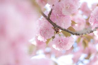 近くの花のアップの写真・画像素材[1148004]