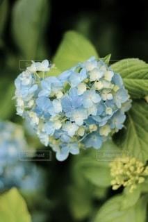 花のクローズアップの写真・画像素材[3376818]