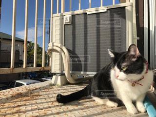 建物の前に座っている黒い猫の写真・画像素材[1116735]