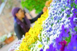 花,観光地,観光,和歌山,お出かけ,和歌山県,マリーナシティ,ポルトヨーロッパ