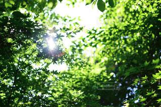 美しい木漏れ日の写真・画像素材[1157843]