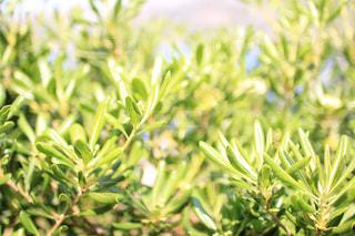 新緑の季節の写真・画像素材[982744]