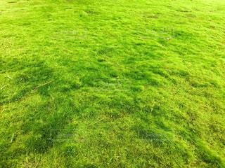 光射す芝の写真・画像素材[982746]