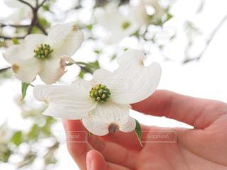 自然,花,植物,白,歩道,ホワイト,草木