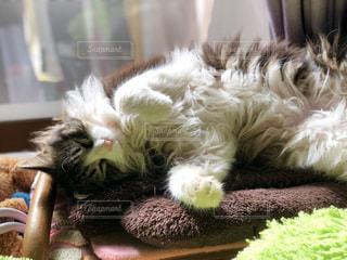 お昼猫の写真・画像素材[1052270]