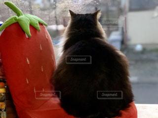 猫・外を眺めてますにゃ♪の写真・画像素材[1053920]