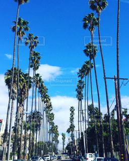 ロサンゼルスのヤシの木の写真・画像素材[1003983]
