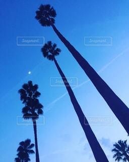 月とヤシの木の写真・画像素材[1012043]
