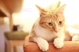 その口を開いてオレンジと白猫の写真・画像素材[984055]