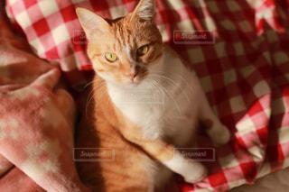 毛布の上に座っている猫の写真・画像素材[984057]