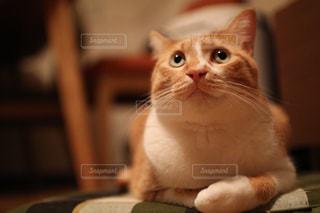 テーブルの上に座ってオレンジと白猫の写真・画像素材[984371]