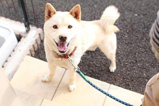 茶色と白の犬のグループの写真・画像素材[995660]