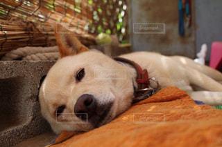 近くに地面に横たわっている犬のアップの写真・画像素材[995664]