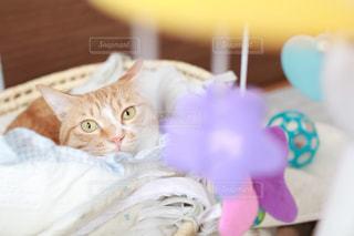 ベッドの上に座っている猫の写真・画像素材[1002634]