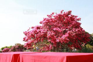 自然,風景,カメラ,ピンク,ピンク色,桃色,お出かけ