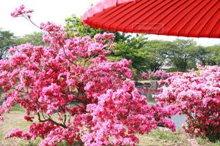 花,カメラ,ピンク,カラフル,鮮やか,草,ピンク色,桃色,草木