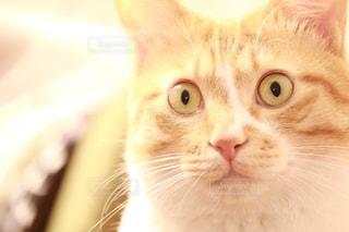 近くにカメラを見て猫のアップの写真・画像素材[1440884]