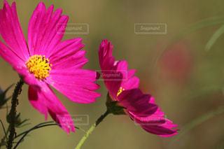 近くの花のアップの写真・画像素材[1454656]