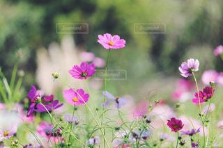 近くの花のアップの写真・画像素材[1454659]