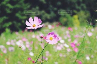 近くの花のアップの写真・画像素材[1454660]