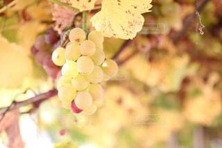近くの花のアップの写真・画像素材[1465550]