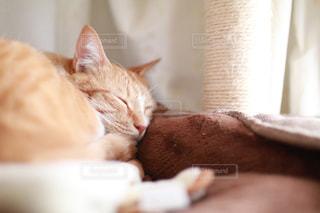 近くに眠っている猫のアップの写真・画像素材[1621819]