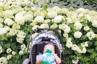 花の写真・画像素材[2012897]