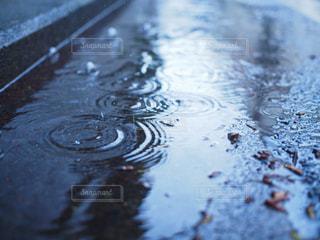 自然,雨,傘,水滴,道路,暗い,悲しい,梅雨,水紋,デジタル一眼,ミラーレスカメラ,梅雨を吹き飛ばそう