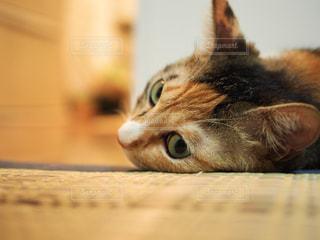 近くに猫のアップの写真・画像素材[1292657]