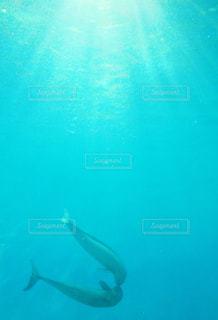 水族館,キス,ハート,リラックス,癒し,旅行,スナメリ