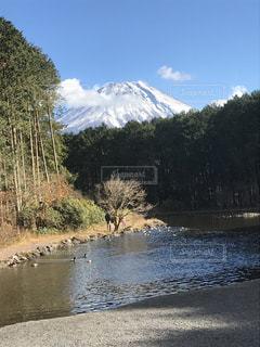 富士山,湖,森,青空,お出かけ,富士花鳥園