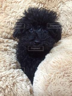 クマの間から顔を出す子犬の写真・画像素材[985631]