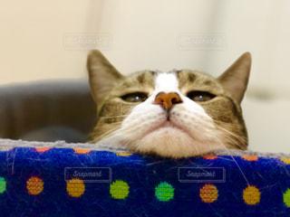 近くに青い表面で横になっている猫のアップの写真・画像素材[986917]