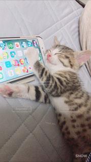 ベッドの上で寝てる猫の写真・画像素材[986263]