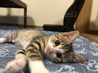 寝っ転がる猫♡の写真・画像素材[986365]