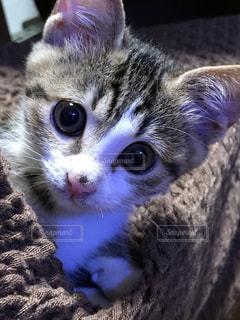 生後2ヶ月の子猫♡の写真・画像素材[986389]
