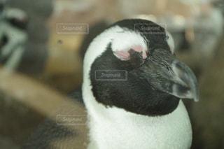 水族館,ペンギン,生き物,休日,眠たい