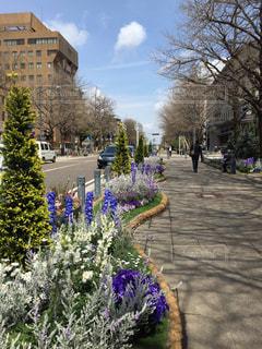 屋外,散歩,樹木,横浜