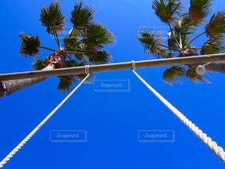 澄んだ青い空に椰子の木の写真・画像素材[1108836]