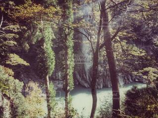 秋の天竜川の写真・画像素材[993280]