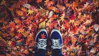 女性,自然,公園,秋,自撮り,紅葉,靴,森,植物,赤,足元,足,葉,もみじ,女子,鮮やか,オレンジ,落ち葉,地面,昭和記念公園,休日,スニーカー,お出かけ,上から,紅葉狩り,紺色,足もと,shoe selfie