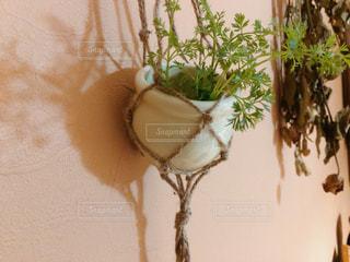 室内に飾ったハンギングプランター - No.1037255