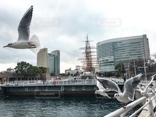 帆船日本丸と飛び立つかもめの写真・画像素材[1053560]