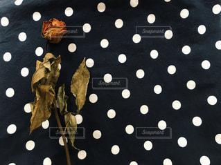 水玉模様の布の上に置かれたバラ - No.1121415