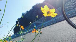 近くの花のアップ - No.1158666