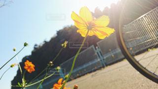 花と自転車の写真・画像素材[1158667]