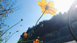 近くの花のアップの写真・画像素材[1158669]