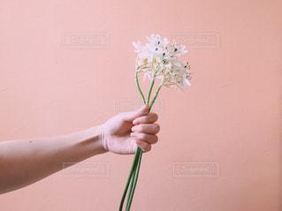 花を持つ手の写真・画像素材[1161909]