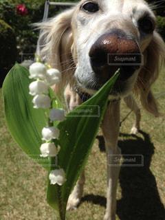 近くに犬のアップの写真・画像素材[988626]