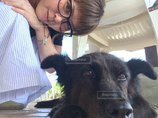 カメラを見て犬の写真・画像素材[991483]